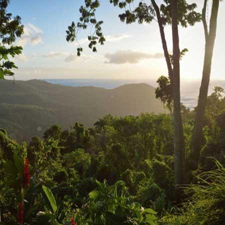 Au bois dormant bon coin vacances Guadeloupe